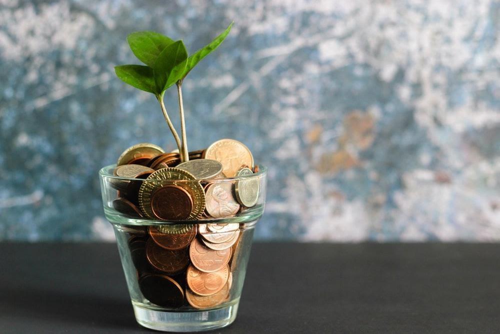 maceta donde la tierra es dinero